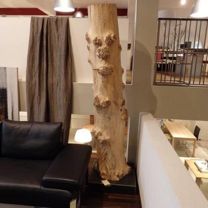 SCHOLTISSEK Baum Rumpf Pappel